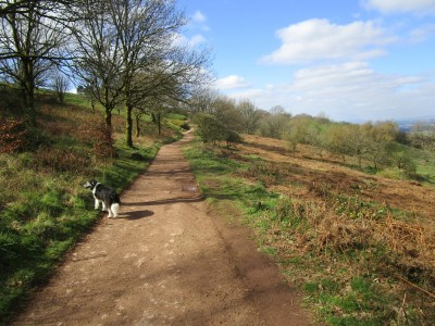 A49 dog-friendly pub and dog walk, Worcestershire - Driving with Dogs