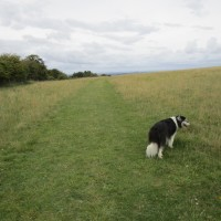 A420 White Horse dog walks, Oxfordshire - Cotswold-dog-walk-and-pub.JPG