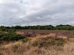 Heathland dog walks, Dorset - Driving with Dogs