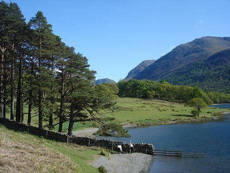 Lake District dog swimming and dog walks, Cumbria - Cumbria dog walk