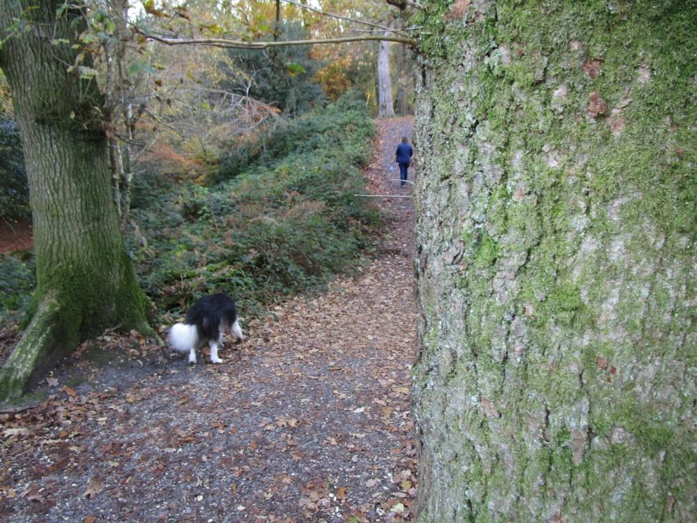 A35 woodland dog walk and literary trail, Dorset - IMG_6514.JPG