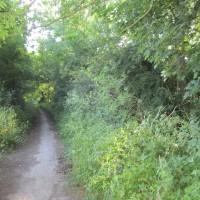 M40 Junction 6 dog-friendly pub with dog walks, Oxfordshire - Oxfordshire dog walk near the M40