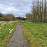 Local Dog Walk: Wheatacre Woods, Lancashire - IMG_20200307_143844.jpg