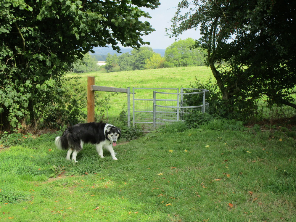 Perfect tearooms and dog walk on the A44, Herefordshire - Dog walks in Herefordshire