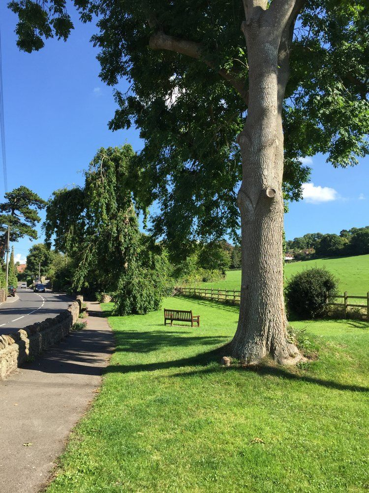 Dog-friendly pub, dog walks and holiday cottage, Somerset - Somerset dog-friendly pub and B&B.jpg