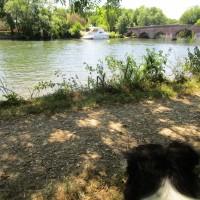 Dog walk and dog-friendly refreshments near Sonning, Oxfordshire - Dog walk and dog-friendly bar near the Thames