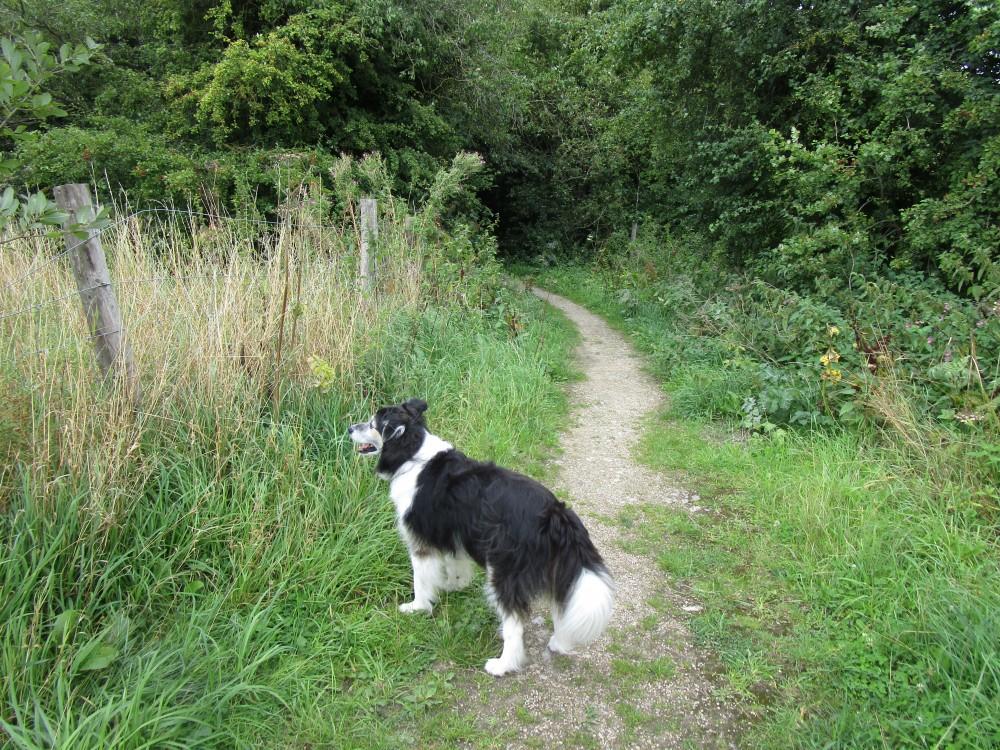 A1M Junction 50 dog-friendly pub and dog walk, Yorkshire - Yorkshire dog-friendly pub and dog walk