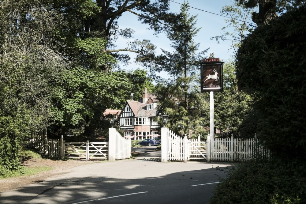A35 New Forest dog-friendly inn and walks, Hampshire - Hampshire dog-friendly pub and dog walk