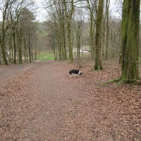 Friston Forest dog walks, East Sussex - Sussex dog walks and dog-friendly pubs.JPG