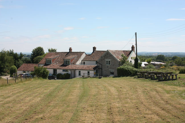 A358 Dog-friendly pub and dog walk, Somerset - Somerset dog friendly pub and dog walk