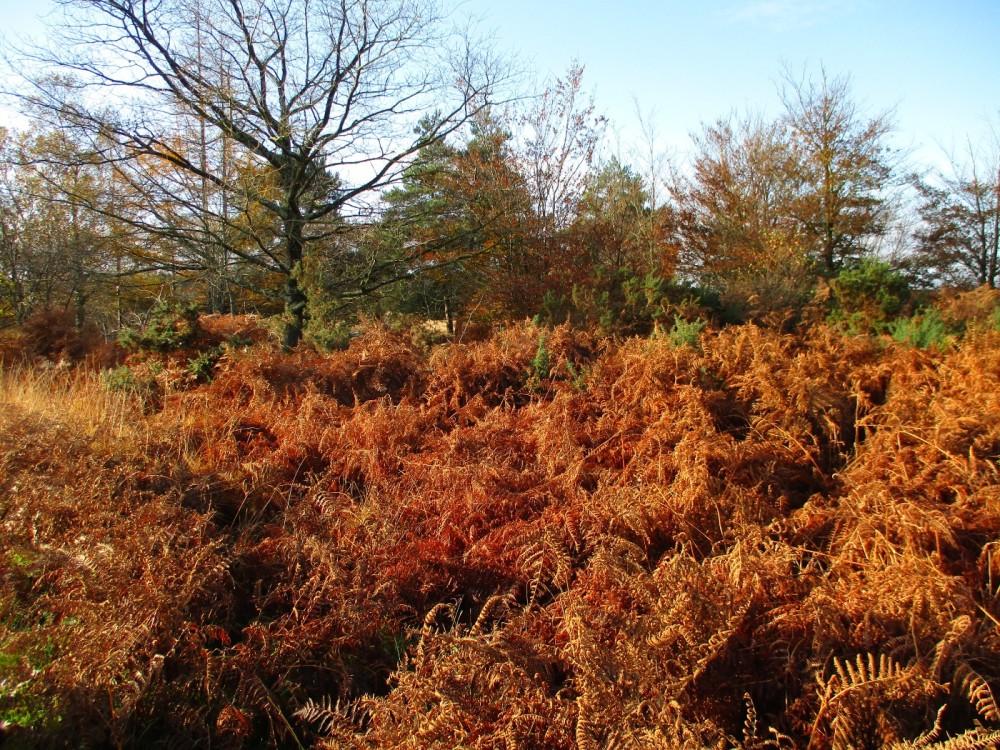 A35 Forest dog walk, Dorset - IMG_0032.JPG