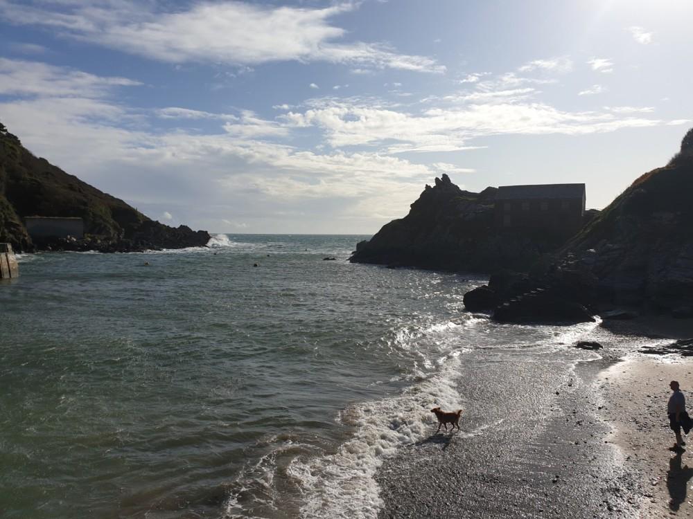Polperro - dog walk, Cornwall - 20191017_112550.jpg