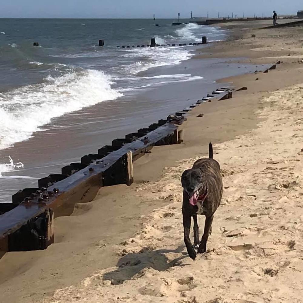 Eccles dog-friendly beach and cafe, Norfolk - cart-gap-beach-norfolk.jpg