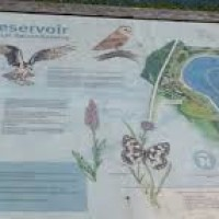 Reservoir dog walk, East Sussex - arlington-reservoir-dogwalks.jpg