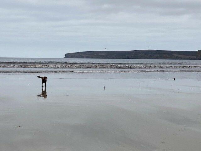 Large sandy and dog-friendly beach, Scotland - Dunnet 2.jpg