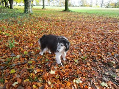 A329 dog-friendly pub and dog walk near Reading, Berkshire - Driving with Dogs