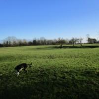 A45 dog-friendly pub and dog walk, Warwickshire - Warwickshire dog walk and dog-friendly pub