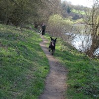 Riverside dog Walk, Worcestershire - E6F241E8-EE29-46CA-8C9D-40B7B0319993.jpeg