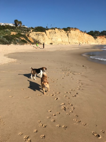 Millie & Honey on the beach on Luz, Portugal