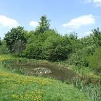 M25 Jct 14 dog walk and dog-friendly pub, Berkshire - horton nature reserve dog walk.jpg