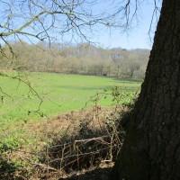 A286 dog-friendly inn and dog walk near Haslemere, Surrey - Surrey dog walks and dog-friendly pubs.JPG