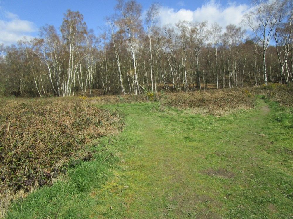 A26 heathland dog walk near Crowborough, East Sussex - East Sussex dog walks.JPG