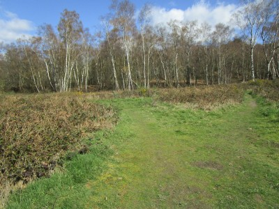 A26 heathland dog walk near Crowborough, East Sussex - Driving with Dogs