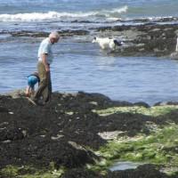 Dog-friendly pub with beach and dog walks, Devon - Devon dog walk and dog-friendly pub.JPG