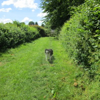 Dog walk and dog-friendly pub nr Lutterworth, Leicestershire - Dog walks in Leicestershire