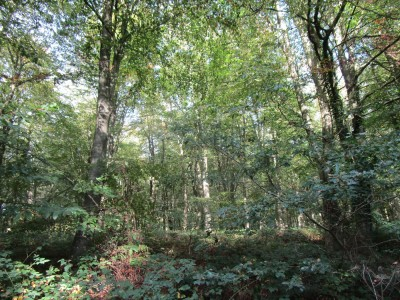 East Blean Woods dog walk, Kent - Driving with Dogs