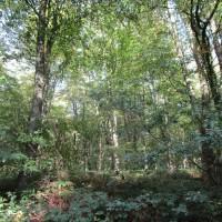 East Blean Woods dog walk, Kent - Dog walks in Kent