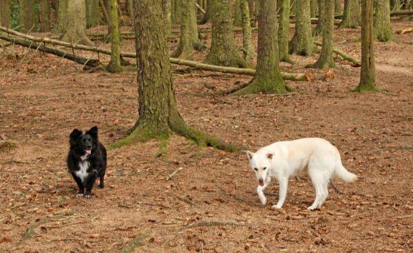 dogs in woods.jpg