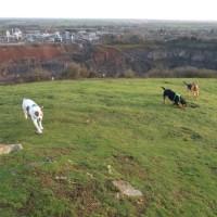 Interesting dog walk at Croft Quarry Nature Reserve, Leicestershire - F73731F8-0747-4EFF-A3CB-191D641879A2.jpeg