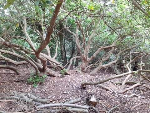 Beautiful hilly woods for a dog walk, Norfolk - E068A09B-50B6-4E91-9407-EF6DCA09996C.jpeg