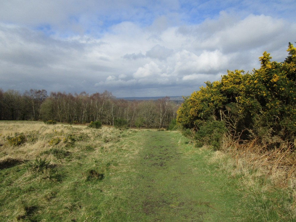 A22 forest dog walks, East Sussex - East Sussex dog walks.JPG