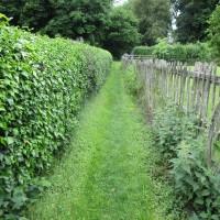 A50 dog-friendly pub and dog walk, Derbyshire - Derbyshire dog walk and dog-friendly pub