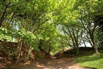 A49 borderland dog walk, Cheshire - Dog walks in Cheshire