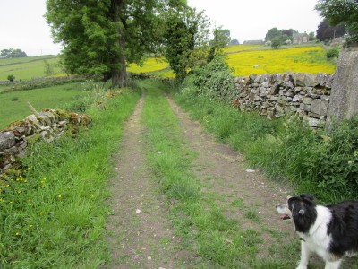 Eyam dog-friendly pub and dog walk, Derbyshire - Driving with Dogs