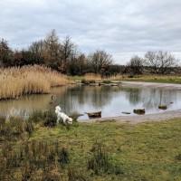 M62 J.7 Dog Walk at Sutton Manor Woodlands (The Dream Sculpture), Merseyside - IMG_20190121_152330.jpg