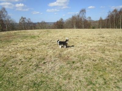 A272 Dog walk on the common near Midhurst, West Sussex - Driving with Dogs