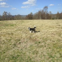 A272 Dog walk on the common near Midhurst, West Sussex - Sussex dog walks.JPG
