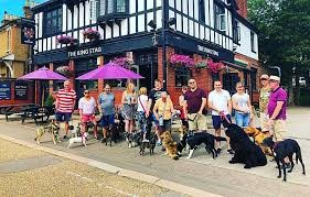 Bushey dog-friendly pub, Hertfordshire - Driving with Dogs