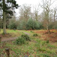 Arboretum and forest dog walk, Hampshire - Surrey dog walks.JPG