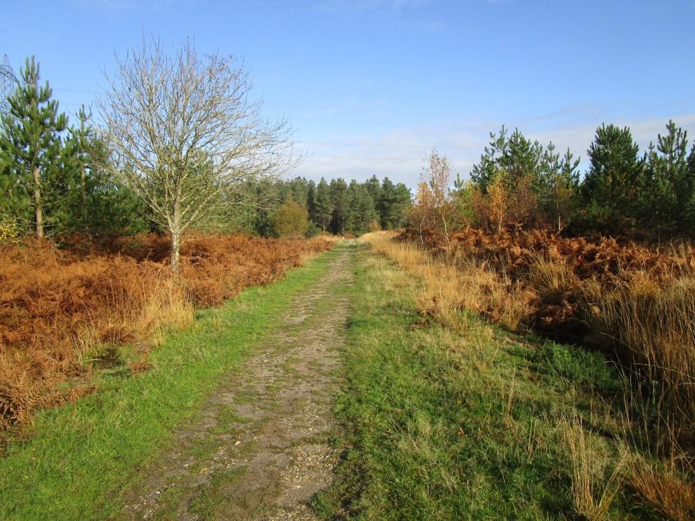 A35 Forest dog walk, Dorset - IMG_6180.JPG