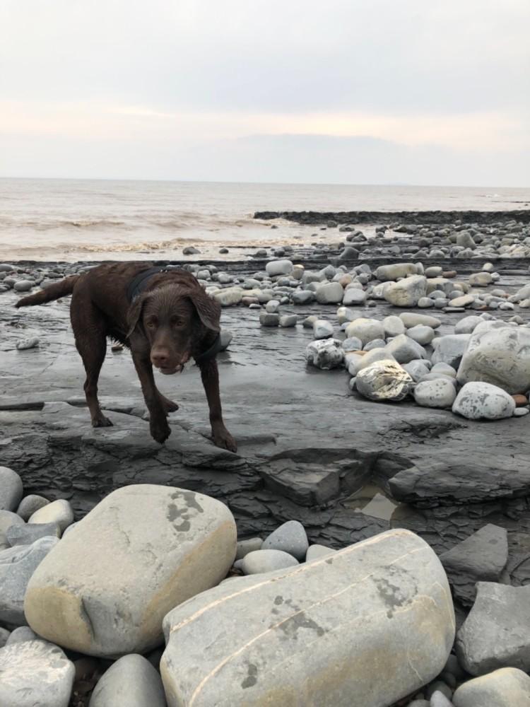 Kilve Beach - dog-friendly, Somerset - A58DEF19-5696-4794-9649-A45E784C4F98.jpeg