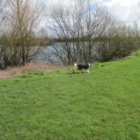 A419 Country Park dog walk and dog beach, Gloucestershire - IMG_1212.JPG