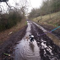 Interesting dog walk at Croft Quarry Nature Reserve, Leicestershire - C4B651F4-18BF-4D84-BA22-ECA0ACE76670.jpeg