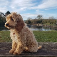 Ulverston Canal dog walk, Cumbria - 20190204_145404.jpg