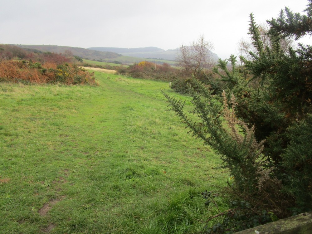 A35 coast path dog walk with views, Dorset - IMG_6736.JPG
