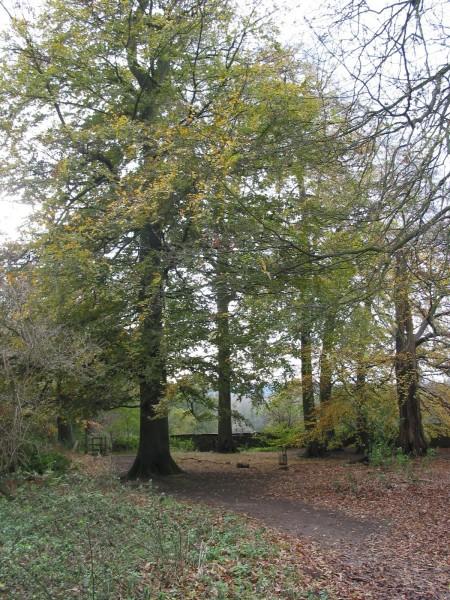 Dog walks in Derbyshire
